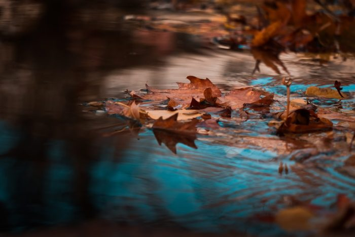 leaves floating in pond