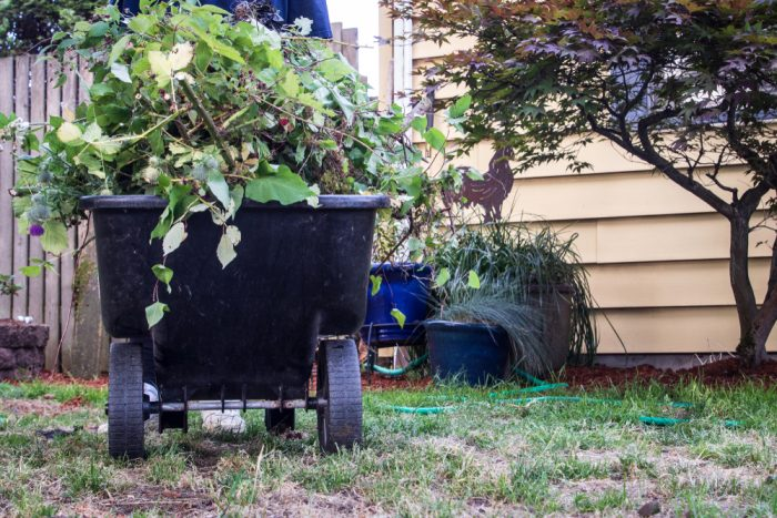 Wheelbarrow with plants and weeds in