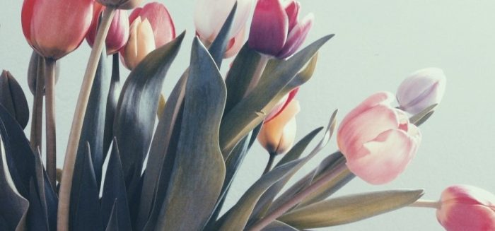 Colourful array of tulips